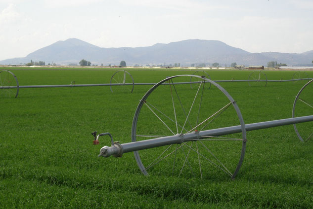 Alfalfa Field in Tulelake