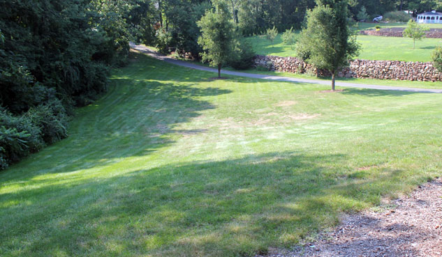 Fall Lawn Care Before
